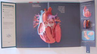 Heart inside2